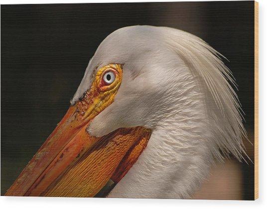 White Pelican Portrait Wood Print