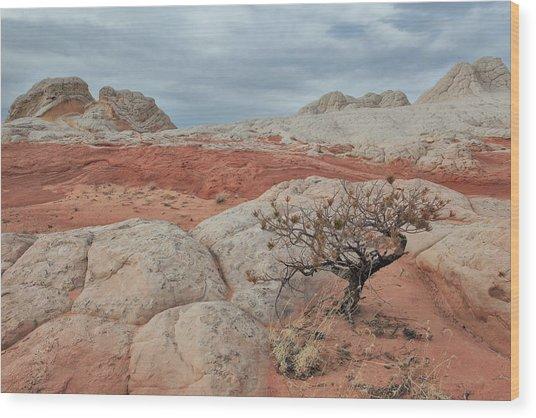 White Pocket Wood Print by Darryl Wilkinson