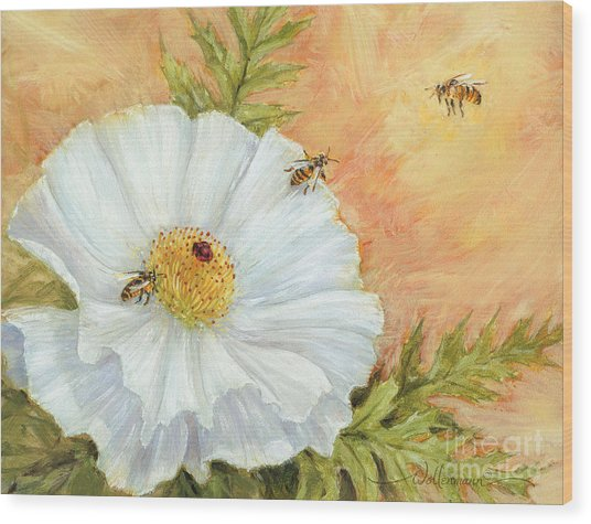 White Poppy And Bees Wood Print