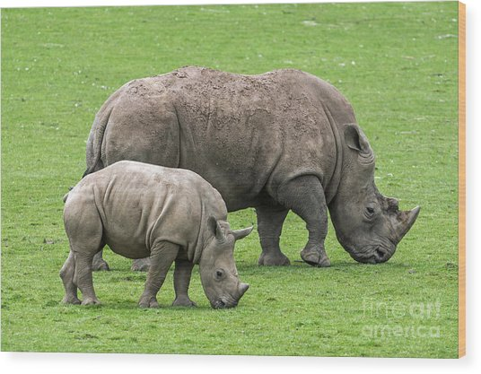 White Rhino 8 Wood Print