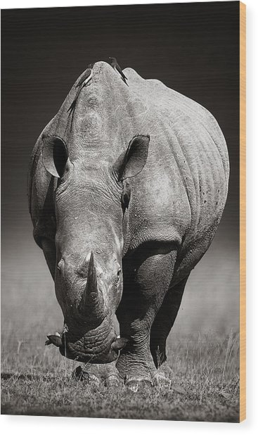 White Rhinoceros  In Due-tone Wood Print