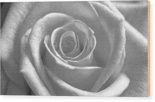 White Rose Glooming Wood Print