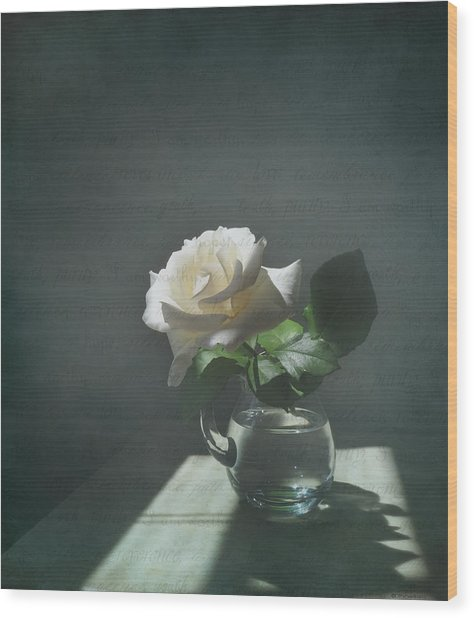 White Rose Still Life Wood Print