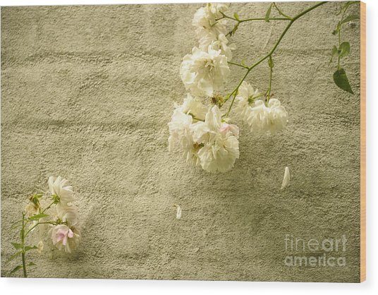White Roses On A Wall Wood Print