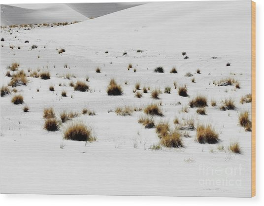 White Sands Life Wood Print