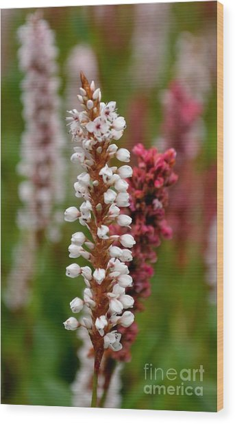 White Stalk Flower Wood Print