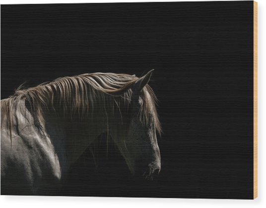 White Stallion - Black Background Wood Print by Ryan Courson Photography