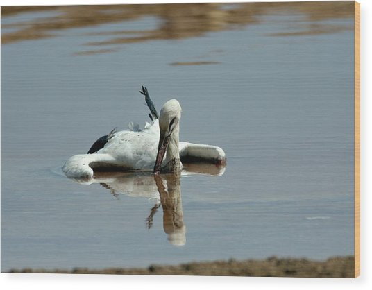 White Stork Drowning In The Dead Sea Wood Print