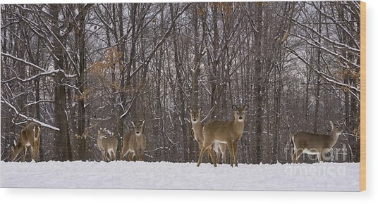 White Tailed Deer Wood Print