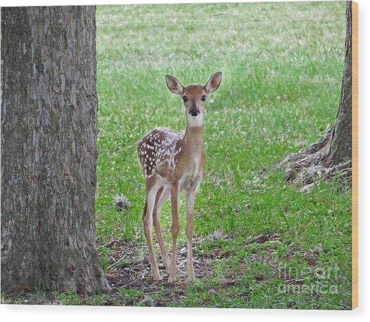 White-tailed Fawn - Face Of Innocence Wood Print