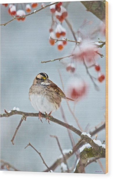 White-throated Sparrow Braving The Snow Wood Print