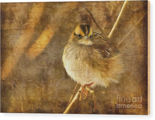 Wood Print featuring the photograph White Throated Sparrow by Lois Bryan