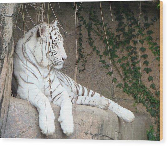 White Tiger Resting Wood Print