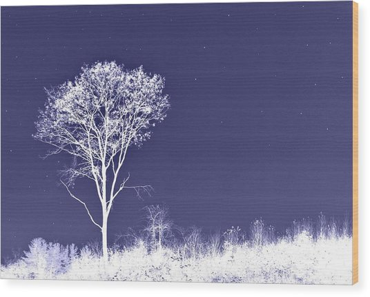 White Tree - Blue Sky - Silver Stars Wood Print