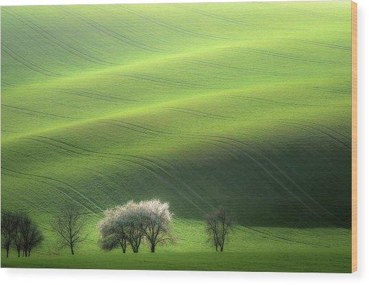 White Trio Wood Print by Marek Boguszak