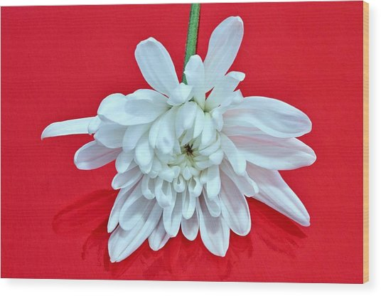 White Flower On Bright Red Background Wood Print