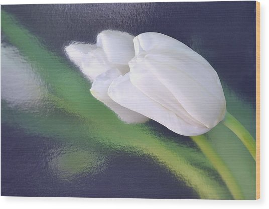 White Tulip Reflected In Dark Blue Water Wood Print