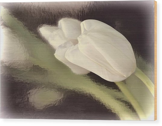 White Tulip Reflected In Misty Water Wood Print