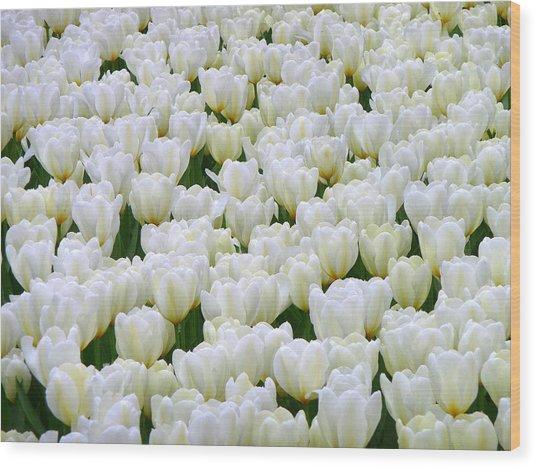 White Tulips Wood Print by F Salem