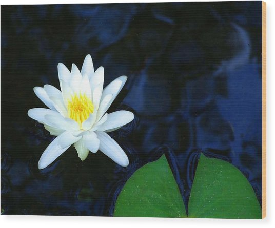 White Water Lilly Abstract Wood Print by Judith Russell-Tooth