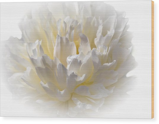 White Peony With A Dash Of Yellow Wood Print