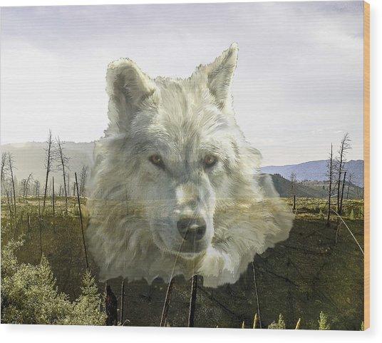 White Wolf Wood Print