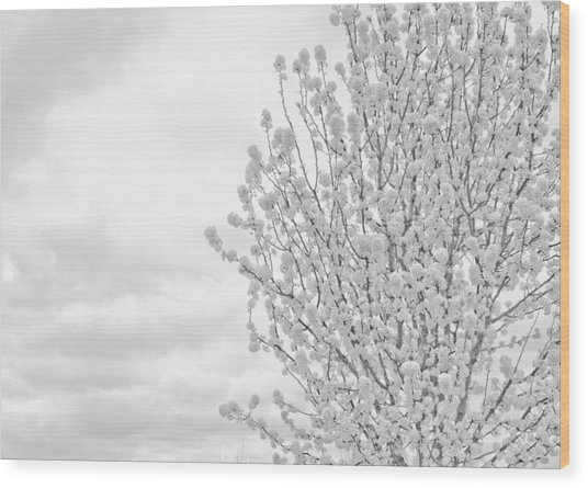 White Wood  Wood Print by DeWaun Lacy