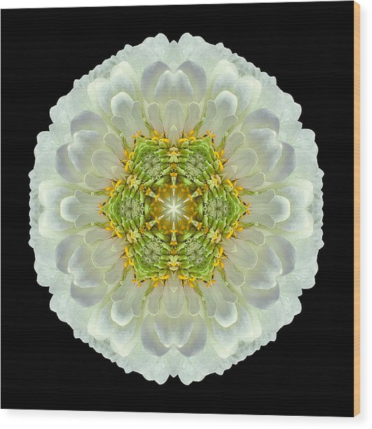 White Zinnia Elegans V Flower Mandala Wood Print