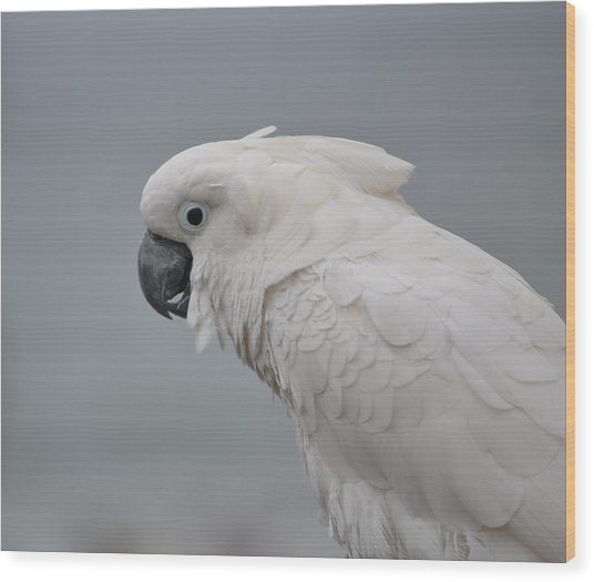 Whitest Bird Wood Print by Kiros Berhane