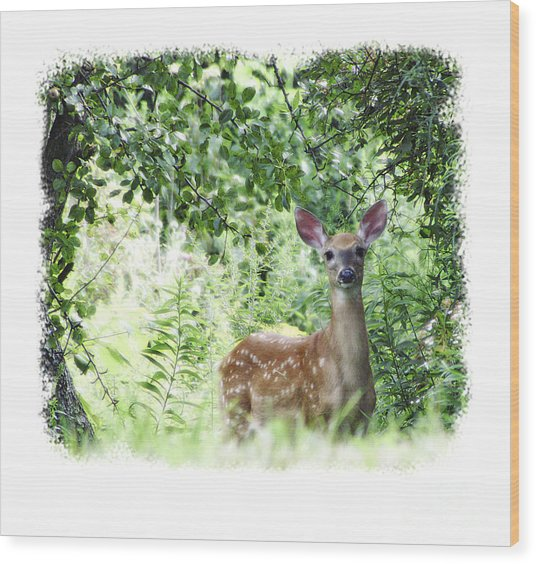Whitetail Fawn Wood Print