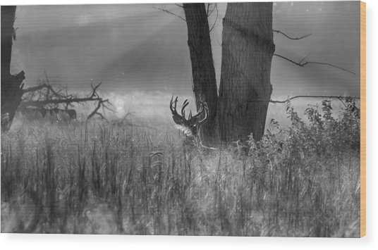 Whitetail Morning Wood Print