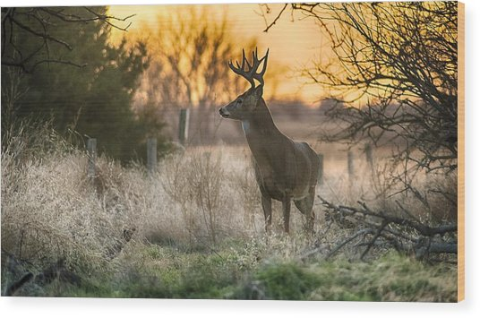 Whitetail Sunset Wood Print
