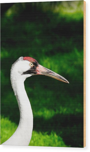 Whooping Crane Wood Print