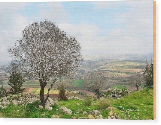 Wild Almond Tree In Beautiful Scenery Wood Print