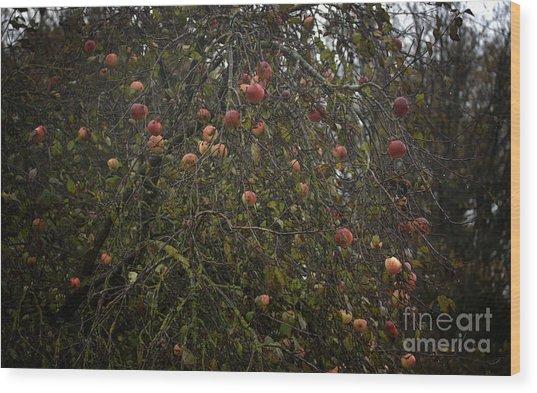 Wild Apple Tree Wood Print by Jolanta Meskauskiene