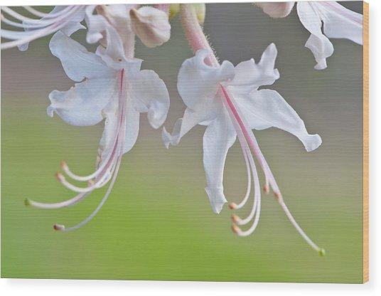 Wild Azalea Wood Print