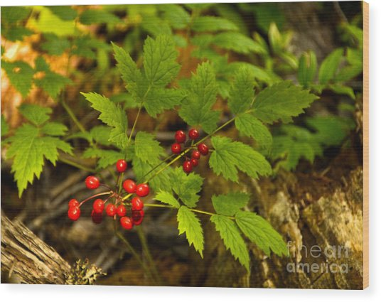 Wild Berries Wood Print