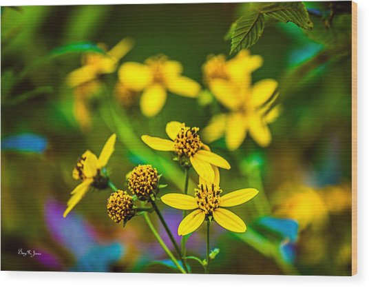 Flowers - Wild Bouquet  Wood Print by Barry Jones