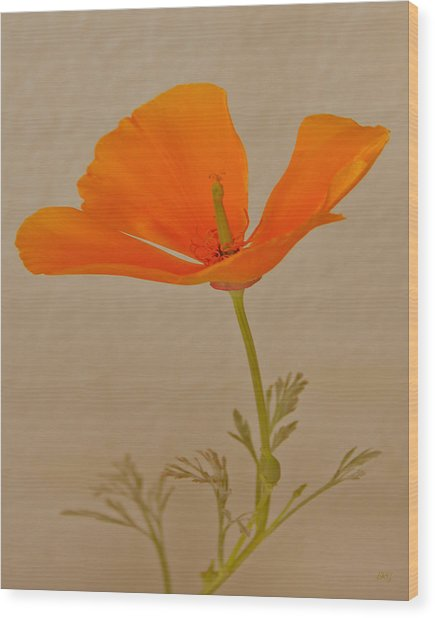 Wild California Poppy No 1 Wood Print