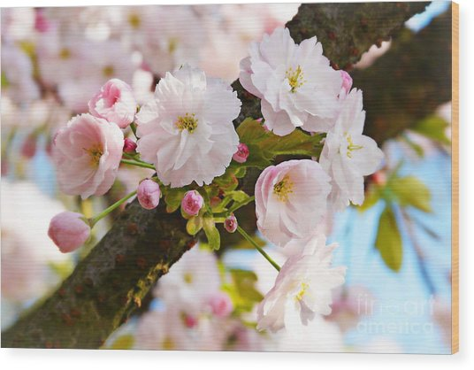 Wild Cherry Blossom Wood Print