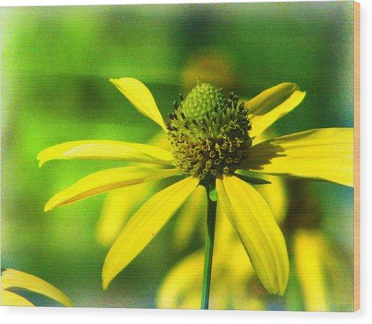 Wild Coneflower Secret Meadow Sandia Mountains Albuquerque New Mexico Wood Print