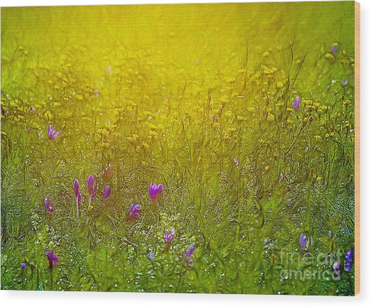 Wild Flowers In Morning Light Wood Print