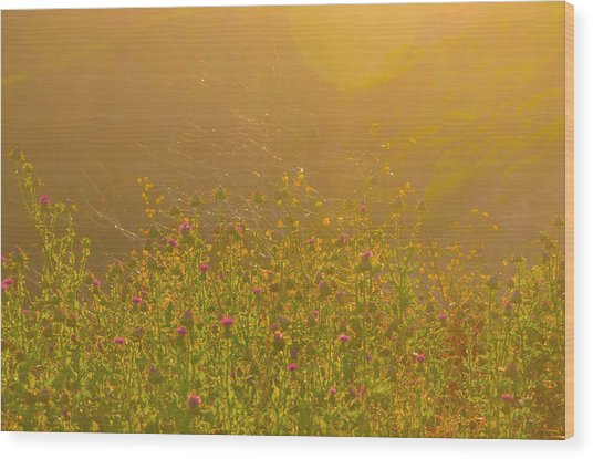 Wild Flowers With Webs Wood Print