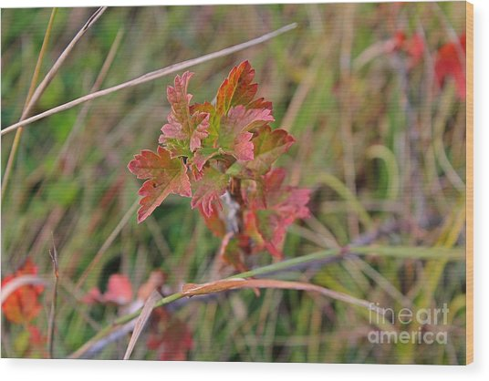 Wood Print featuring the photograph Wild Gooseberry Leaves by Ann E Robson