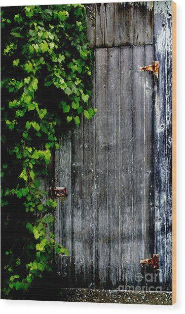 Wild Grape Vine Door Wood Print