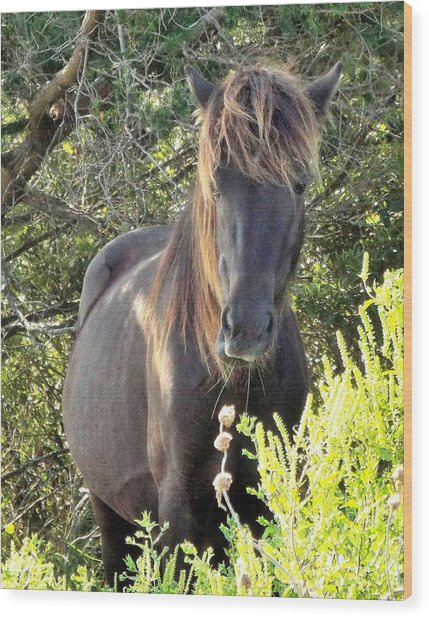 Wild Horse Close Up Wood Print