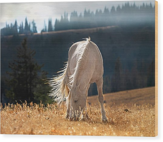 Wild Horse Cloud Wood Print