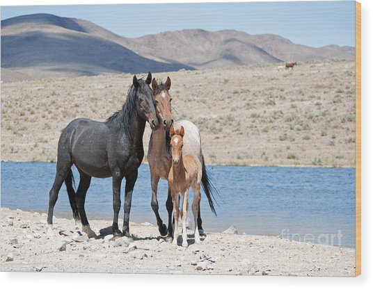 Wild Horse Family Wood Print