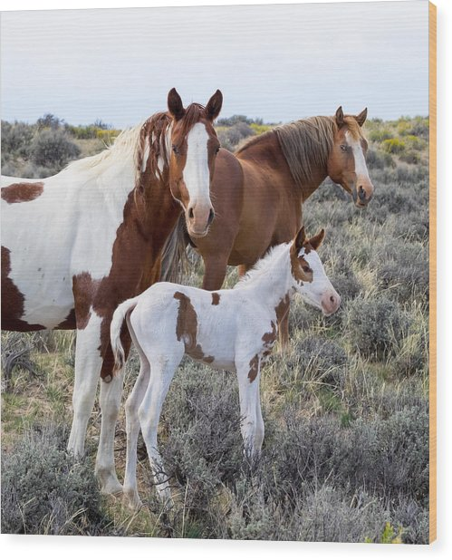 Wild Horse Family Portrait Wood Print