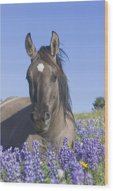 Wild Horse Foal In The Lupines Wood Print